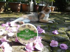 Utama Spice Green Leaf Face Mask and Scrub Review - Interesting Balinese traditional face mask/scrub, consists of jackfruit leaves, guava leaves, and rice for brighter face.