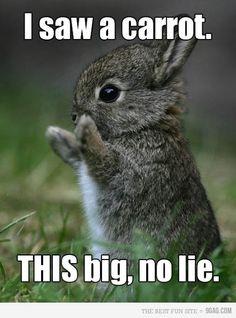 I saw a carrot. This big, no lie! Cute cute cute little bunny.