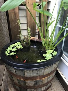 Does my barrel pond count? : Aquariums