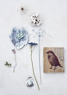 bird and flowers watercolour and litho print inspiration Do It Yourself Inspiration, Nature Collection, Still Life, Birds, Crafty, Drawings, Floral, Artwork, Vintage