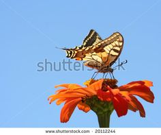 Old House Stock Photo 48790039 : Shutterstock
