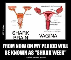 Shark week lol