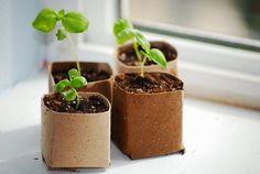 O BAÚ DE IDEIAS DE FABIO SPECK: Gardening In Class