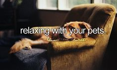 Relaxing with your pets