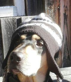 Hunde Foto: roland und grisu - koit is as noch auf der oim. Hier Dein Bild hochladen: http://ichliebehunde.com/hund-des-tages  #hund #hunde #hundebild #hundebilder #dog #dogs #dogfun  #dogpic #dogpictures