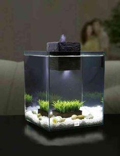 idée de déco de petit aquarium