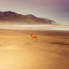 Beach / animals / dog : I love the atmosphere, color and tone of this shot. Feels magical!  The before & after images are on my blog. The link is on my profile page.    ►Reblog this on Tumblr This image is now ready for reblogging on Tumblr.