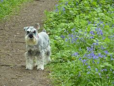 Best bluebell walk!