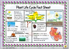 Here's a page with some basic facts about the the life cycle of a plant. Includes a helpful glossary.