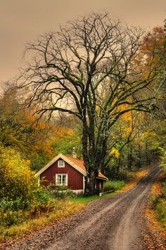 Autumn at the cottage...