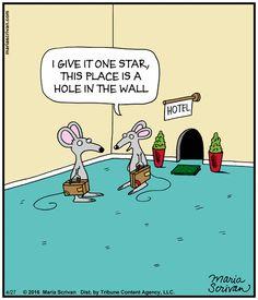 Today on Half Full - Comics by Maria Scrivan Funny Puns, Funny Laugh, Funny Cartoons, Funny Quotes, Funny Stuff, Funny Images, Funny Pictures, Cartoon Rat, Social Media Humor