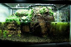 With an inspired arrangement of décor and water features, even a small paludarium can produce a grand impression. Photo by Bill Brissette.