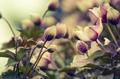 Spring Blooms by Jo Semmens #floral #fineart #photography
