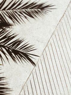Palm Shadow 1 by David Kitz   Buy Affordable Online Exclusively on Tappan Collective