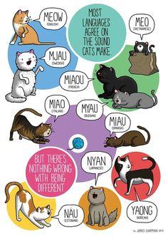 O artista inglês James Chapman criou uma coleção de divertidos desenhos que ilustram, entre outras coisas, como cada língua registra ruídos de câmeras fotográficas e sons de gatos e cachorros