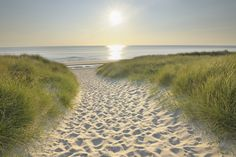 This picture reminds me of the beach paths we walked through in Fort Walton Beach, Florida. .I would love to go there again someday. :)