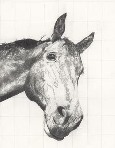 Instagram Site, Prints For Sale, Pencil Drawings, Printmaking, Moose Art, Wildlife, Horses, Abstract, Illustration