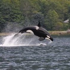 San Juan Islands north of Seattle.  Great Whale watching.  We followed pods of Orca whales on our recent trip.