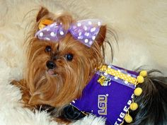 LSU Tigers Dog vest, harness. Size Small available for immediate ship. $33. Dog Vest, Photo Printing Services, Photo Blanket, Lsu Tigers, Yorkies, Photo Canvas, Little Dogs, Print Pictures, Dog Design