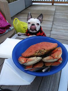 Dinner? by WelcomeToTheDoghouse, via Flickr