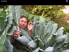 John from  shares with you how you can double your yields in your garden by using wood chips and rock dust.  In this video John visits the Amazing Permaculture Garden  to share with you exactly how they are growing super-sized vegetables.  After watching this video you will know how you can...