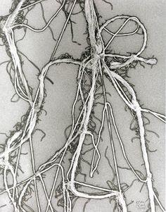 Eva Hesse - Enough Rope