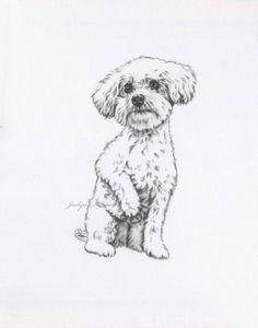 May 2020 - Bijon Kunst Bijon Zeichnung Originalzeichnung Bijon Skizze Animal Sketches, Art Drawings Sketches, Animal Drawings, Sketches Of Dogs, Drawings Of Dogs, Contour Drawings, Drawing Faces, Art Illustrations, Frise Art
