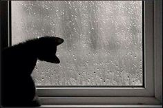 Kitty looking out the window on a rainy day <3