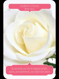 Purification - Remove all negativity. Be positive. (Flower Therapy by Doreen Virtue & Robert Reeves) #annasangelwings