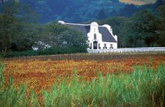 The Stellenbosch Wine Route is beautiful AND delicious!