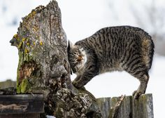 Fotograf Lazy cat on the fence von Attila Simon auf 500px