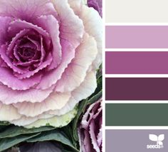 market hues - beautiful cabbage color palette with purples, forest green and a slightly purpley grey hue.