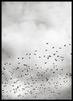Poster with black and white wall art, featuring birds flying among the clouds in the sky. A beautiful design with a nice feeling that will look good in a collage in your living room, hallway or bedroom. You can find more stylish posters with photos in the Photo art category. Find your favorites and create a personal photo wall. www.desenio.com