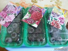 Петуния.: Группа Практикум садовода и огородника