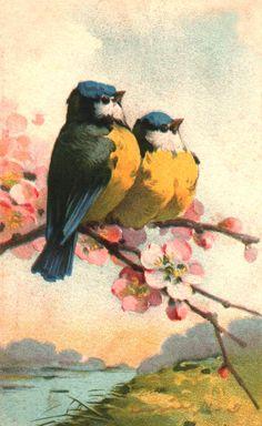 Catherine+Klein_Birds