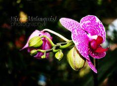 Bright OrchidFlowerNatureColorMacroFine Art by NorthernDreamStudio, $15.00