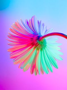 Neon Flowers: Photography & Art Direction by Claire Boscher - Inspiration Grid Simple Flower Drawing, Easy Flower Drawings, Easy Flower Painting, Flower Painting Canvas, Neon Flowers, Acrylic Flowers, Neon Photography, Backlight Photography, Photography Composition