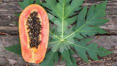 Papaya leaves have a high concentration of papain & other enzymes, as well as various phytonutrients & antioxidants. They help promote digestion & prevent constipation. Papaya Leaf Extract, Papaya Tree, Fruit Plants, Healing Herbs, Medicinal Plants, Natural Remedies, Health And Wellness, Organic, Horticulture
