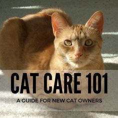 If you're a new cat owner, Cat Care 101 covers all the basics you'll need to know to care for your cat.