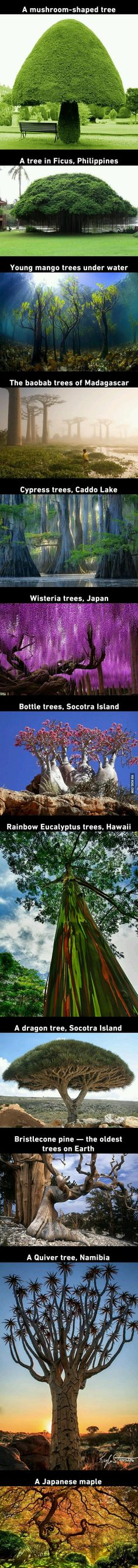 12 Beautiful Trees That You'd Thought They Grow On Pandora From Avatar - Garden Types Beautiful Places To Travel, Cool Places To Visit, Beautiful World, Beautiful Beautiful, Garden Types, Belle Photo, Amazing Nature, Beautiful Landscapes, Wonders Of The World