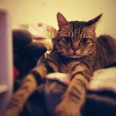 #cats - @angeline_chen- #webstagram