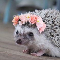 I wish I had a #hedgehog friend