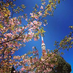 【artist_rio】さんのInstagramをピンしています。 《・ ・ 今週は、桜の木越しの東京タワーをパチリ★ ・ 今日も東京タワー大展望台club333ステージから、飲酒運転撲滅運動のトーク&ライブの司会です! ・ ・ #cherryblossom #cherryblossoms #桜 #桜の木 #東京タワー #tokyotower #tokyo #東京》