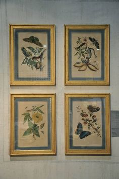 A COLLECTION OF FOUR HAND COLOURED ENGRAVINGS BY MARIA SIBYLLA MERIAN C. 1700