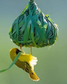 A beautiful mind Nature Animals, Animals And Pets, Cute Animals, Exotic Birds, Colorful Birds, Beautiful Mind, Beautiful Pictures, Nester, Mundo Animal