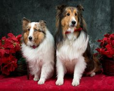 Holiday Portrait