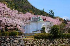 151:「春の仁風閣、威風堂々です!!」@久松公園