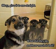 22 Funny Animal Pictures for Your Tuesday - Funny, meme