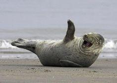 Heavy Dosage Of Laughing Animals Just To Make You Smile Pics) Humor Animal, Animal Puns, Animal Captions, Animal Antics, Funny Captions, Happy Animals, Funny Animals, Cute Animals, Smiling Animals