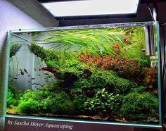 Sweet! #TropicalFishAquariumIdeas